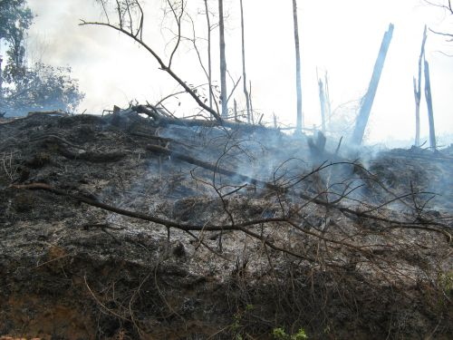 Forest fire in Borneo