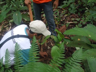 planting saplings in the national park
